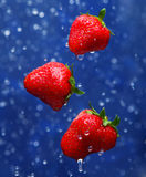 czerwona truskawka Obraz Stock