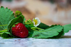 Czerwona truskawka na stole Zdjęcie Royalty Free
