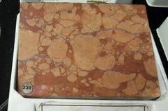 Czerwona Verona marmurowa osadowa skała obrazy stock