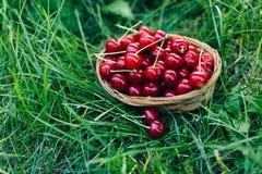 Czerwona wiśnia w drewnianym koszu Fotografia Stock