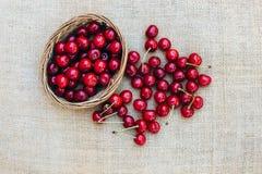 Czerwona wiśnia w drewnianym koszu Zdjęcie Royalty Free