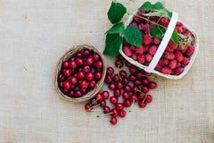Czerwona wiśnia w drewnianym koszu Zdjęcie Stock