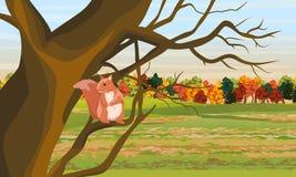 Czerwona wiewiórka na gałąź drzewo Pole i jesień deciduous las ilustracji
