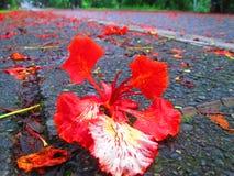 Czerwonawa ulica Zdjęcie Royalty Free