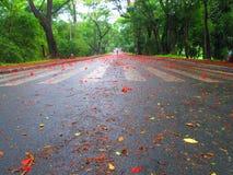 Czerwonawa ulica Fotografia Royalty Free