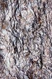 Czerwonawy tekstury góry łyszczyk zdjęcie royalty free