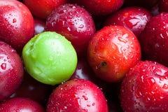 Czerwone świeże śliwki z jeden śliwką wciąż zielenieją Zdjęcia Stock