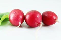 czerwone świeże rzodkwie Fotografia Royalty Free