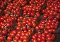 czerwone świeżych pomidorów Pomidory stos Lato tacy rynku rolnictwa gospodarstwo rolne pełno organicznie pomidory pojęcia zdrowe  Zdjęcie Royalty Free