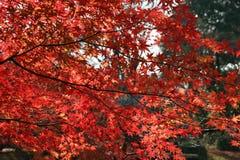 czerwone. obraz royalty free