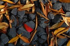 czerwone Fotografia Stock
