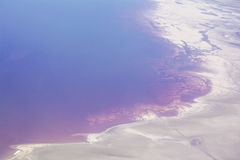 Czerwone algi na Wielkim Salt Lake Zdjęcia Royalty Free