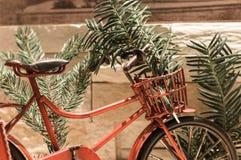 Czerwone bicyklu i sosny gałąź zdjęcie royalty free