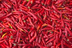 czerwone chillies Fotografia Royalty Free