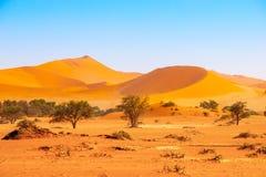 Czerwone diuny Namib pustynia blisko Sossusvlei, aka Sossus Vlei, Namibia, Afryka Zdjęcie Stock