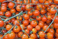 czerwone dojrzałe pomidory Fotografia Stock