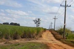 Czerwone drogi gruntowe w Brazylia z trzciny cukrowa plantacją Obraz Stock