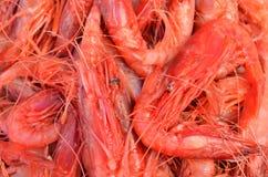 Czerwone duże królewiątko garneli krewetki w rybiego rynku sprzedawaniu w indyczym Antalya Obraz Stock