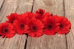 Czerwone gerbera stokrotki Zdjęcia Royalty Free