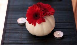 Czerwone gerbera stokrotki w rzeźbić białych Casper baniach Fotografia Royalty Free