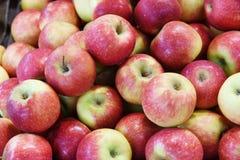 czerwone jabłka fotografia royalty free