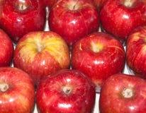 czerwone jabłka zdjęcie royalty free