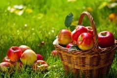czerwone jabłka Obrazy Stock
