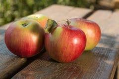 czerwone jabłka Fotografia Stock
