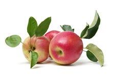 czerwone jab?ka zdjęcia royalty free