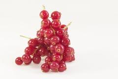 czerwone jagody Obraz Royalty Free