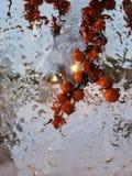 Czerwone jagody i lód zdjęcie stock
