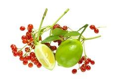Czerwone jagody i wapno zdjęcia royalty free