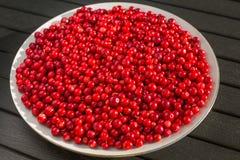 Czerwone jagody na białym talerzu obrazy royalty free