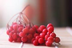 Czerwone jagody viburnum na stole obraz stock