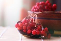 Czerwone jagody viburnum na stole obrazy stock
