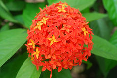 czerwone kwiaty Zdjęcie Royalty Free
