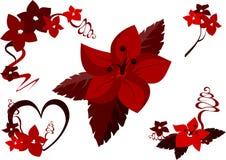 czerwone kwiaty Zdjęcia Royalty Free