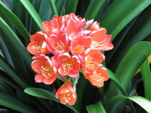 czerwone kwiaty Obrazy Royalty Free