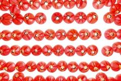 czerwone latarnie Fotografia Royalty Free