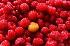 Czerwone malinki Obrazy Royalty Free