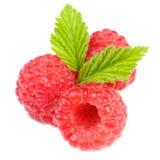 Czerwone malinki z Zielonymi liśćmi Odizolowywającymi na Białym tle Zdjęcia Stock