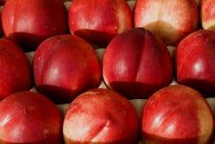 czerwone nektaryny Fotografia Royalty Free