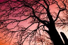 czerwone niebo nad drzewem Fotografia Royalty Free