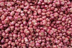 czerwone obfitość cebule Zdjęcie Stock