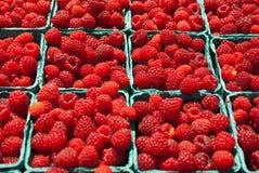 czerwone organicznie malinki fotografia stock