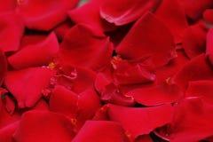 czerwone płatki Zdjęcia Royalty Free