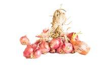 czerwone perełkowe cebule na białym tle. Fotografia Stock