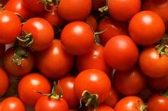 czerwone pomidorów Obrazy Royalty Free