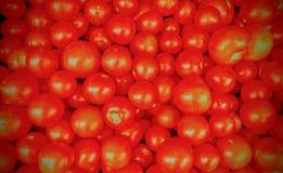 czerwone pomidorów Obrazy Stock