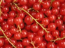 czerwone porzeczki Fotografia Royalty Free